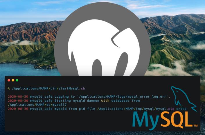 MAMP MySQL mysqld pid error - Teaser image